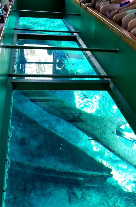 glass bottom boat tours ta florida silver springs state park wild monkeys and glass bottom