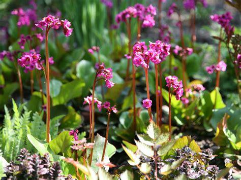 Garten Schattenpflanze by Schattenpflanzen Mit Bl 252 Ten Und Blattschmuck Mein
