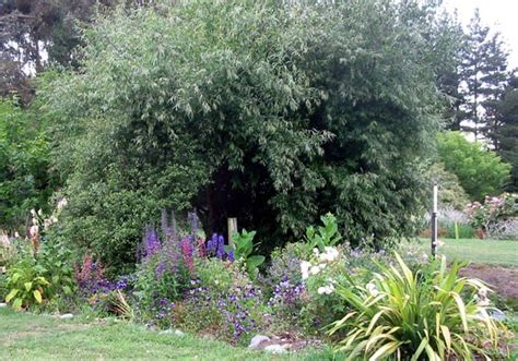 Willow Gardens by Blue Delphiniums