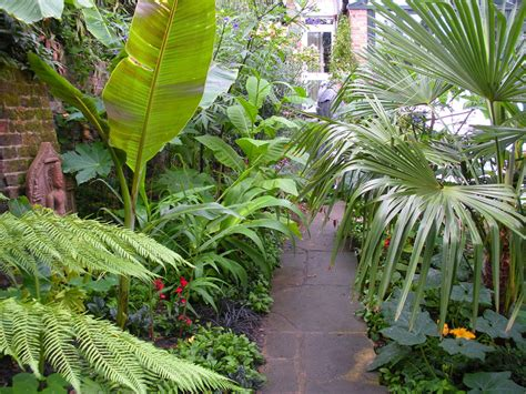 plants for backyard tropical plants garden in the small backyard with natural