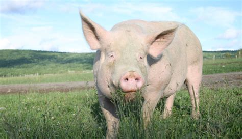 how sprinkle the pig escaped the river of tears a story about being apart from loved ones strengths therapeutic children s books books wal mart harms animals ignores science farm sanctuary
