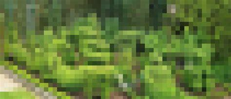 Buchsbaum In Form Schneiden 2025 by Buchsbaumfiguren Schneiden 04 Buchsbaum Schneiden Als
