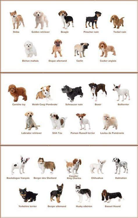 different races of dogs comment avoir d autre race de chien sur nintendogs