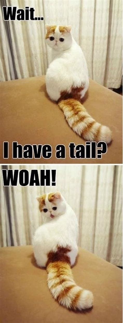 Cute Funny Cat Memes - 30 funny animal captions part 12 30 pics amazing