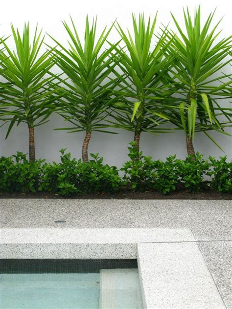 Backyard Landscaping Perth by 25 Best Ideas About Tropical Pool Landscaping On