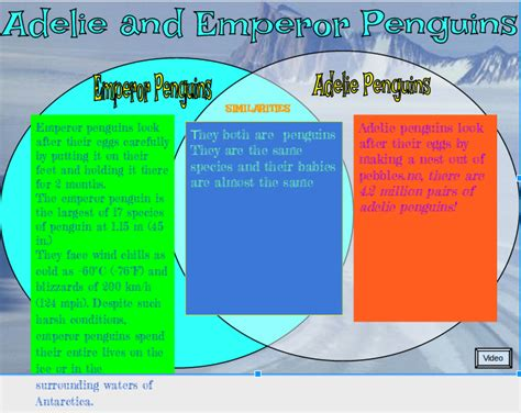 adelie penguin diagram adelie and emperor penguins