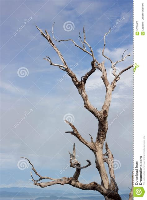 dry sticks decoration drone fly tours beautiful dried branches i stock photo image 57690800