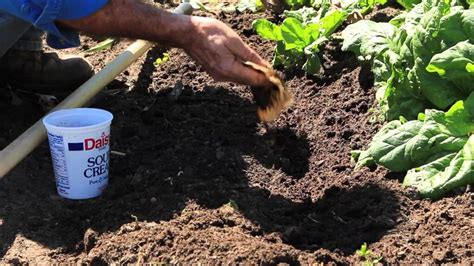 Coffee Grounds For Gardening by 5 Tips Tricks For Beginner Gardeners Plant