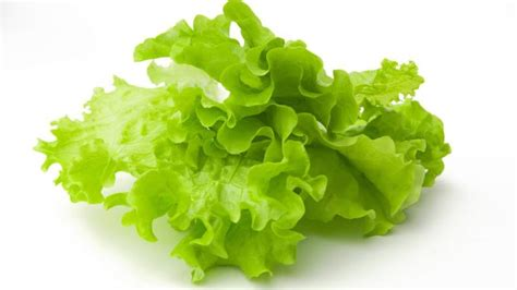 carbohydrates lettuce calories in lettuce finediets