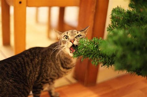 27 dogs and cats that destroyed christmas