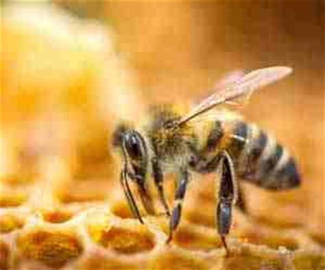 sognare insetti volanti api nei sogni cosa significa sognare le api