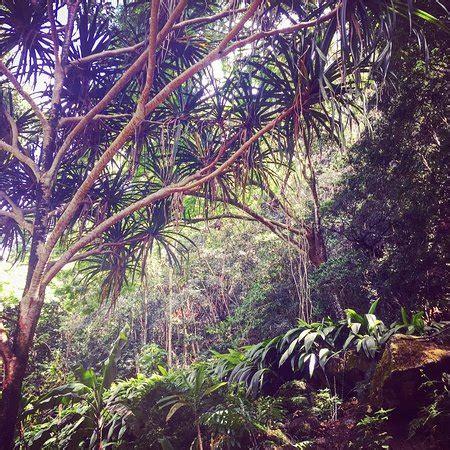 Waimea Arboretum And Botanical Garden Waimea Arboretum And Botanical Garden Oahu Hi Top Tips Before You Go With Photos Updated