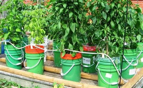 5 gallon container gardening 5 gallon self watering tomato container diy projects for