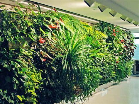 30 jenis tanaman hias untuk taman dinding vertikal beserta gambarnya