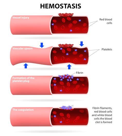 blood in blood biology i biology visionlearning