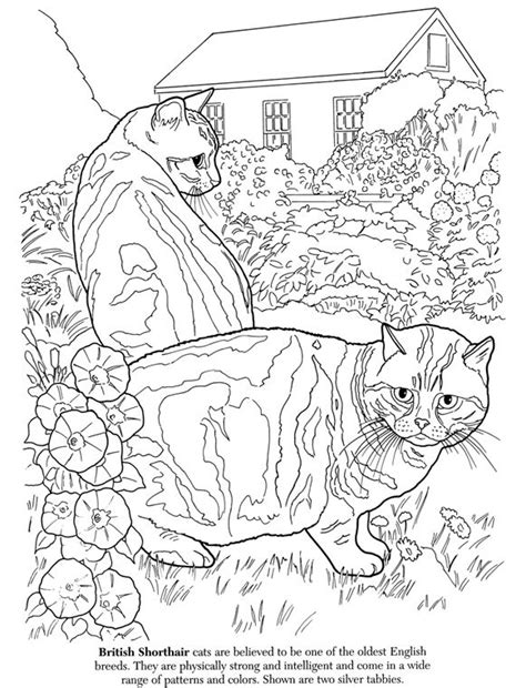 coloring book groups the cat lover s coloring book coloring