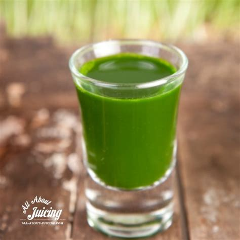 Detox Recipes Playbuzz by Wheatgrass Health Benefits Of Cereal Grasses
