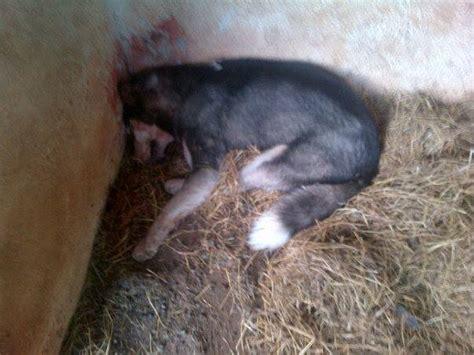 spahn möbel hond doodgeslaan na hy glo bok byt maroela media