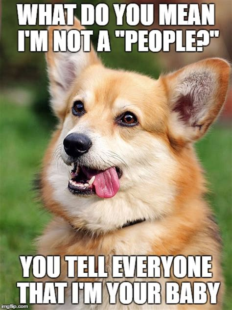 Confused Dog Meme - 10 corgi memes that will make you laugh what every dog