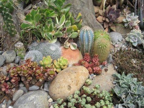 Cactus Rock Garden Some Photos Of My Succulent Rock Garden