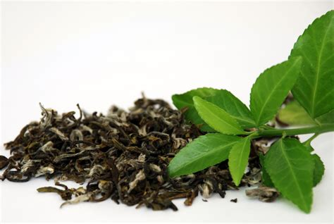 Teh Hijau Slimming Tea what are the health benefits of green tea healthy harbor