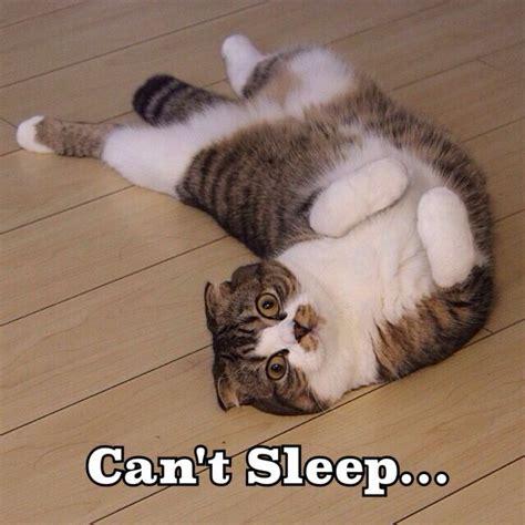 Cant Sleep can t sleep animals