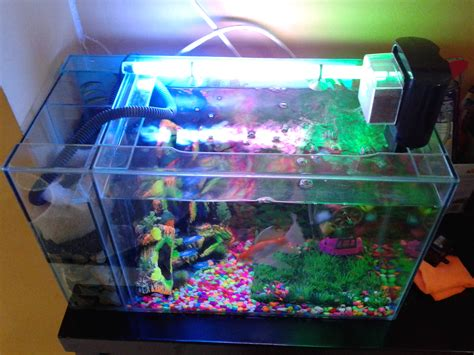 membuat filter aquarium laut akuarium firman personal blog