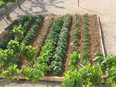 giardino sinergico orto sinergico orto