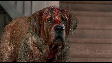 what of is cujo cujo 25th anniversary edition