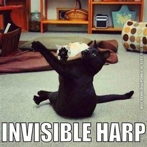 Harp Meme - cat playing invisible harp fun cat pictures