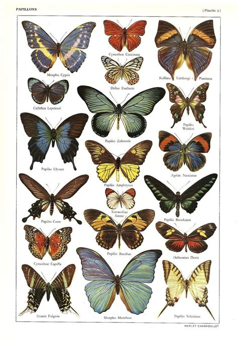 tattoo butterfly vintage 501 best images about butterflies castles on pinterest