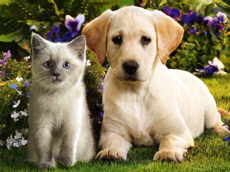 kittens and puppies puppies and kittens quotes quotesgram