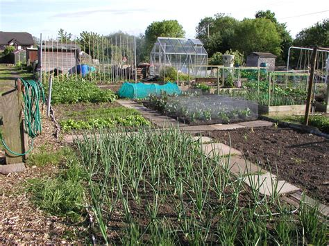 Allotment Vegetable Gardening Allotment Garden Vegetable Fruit Herb Gardening On An