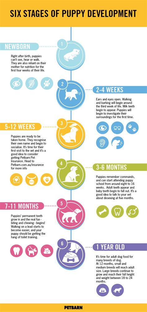 puppy milestones six stages of puppy development petspot