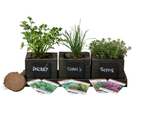 Herb Planter Kit by Planter Pro S Herb Garden Kit Barbecuebible