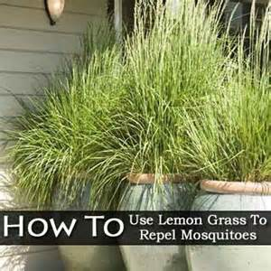 Flower Tower Planters - how to use lemon grass to repel mosquitoes