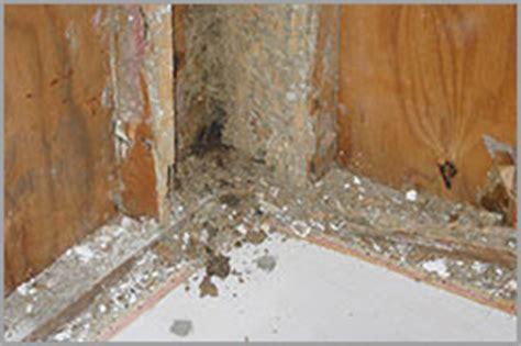 seasons termite pest control       termites termites   nature