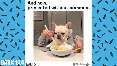 funny dog meme compilation barkbox youtube