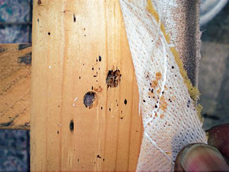 bed bugs in wood bed bug infested furniture deface defile or deconstruct