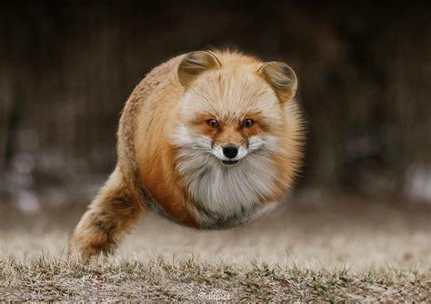 Be To Animals what if animals were balls joyenergizer