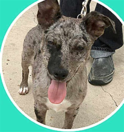 rescues lost  abandoned pets  south padre island