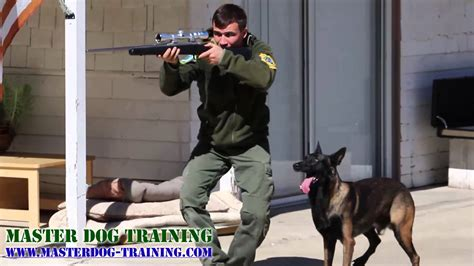 how are k9 dogs trained k9 tactics