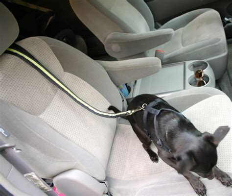 car restraint car seat belt harness for dogs get free image about wiring diagram