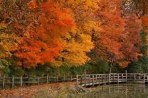 fall landscaping 20 quot x30 quot fall landscape wood prints