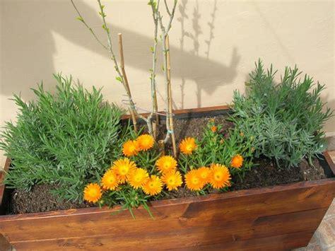 pianta grassa con fiore rosso mesembriantemo una pianta grassa che non teme caldo e