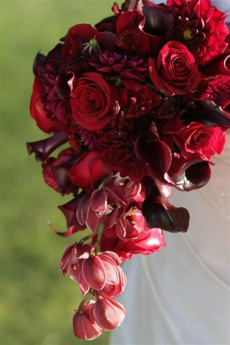wine colored flowers 38 best images about the on