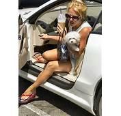 Britney Spears Lacey Car  Celebrity Dogwatcher Flickr