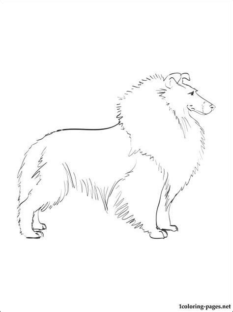 sheep dog coloring page free sheltie coloring pages