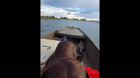 gator trax boat with prodrive 2008 gator trax 36 hp pro drive duck boat mud motor youtube