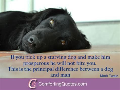 about dogs quotes about dogs comfortingquotes
